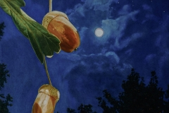 Acorns at Night