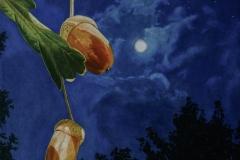 Acorns at Night